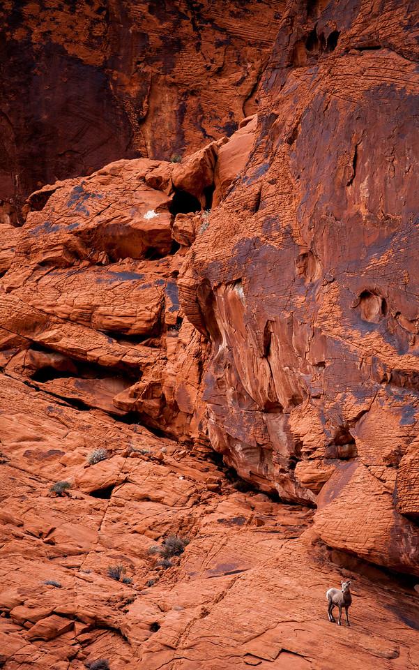 IMAGE: https://horshack.smugmug.com/Nature/Nevada/i-PqDCn6N/0/X2/nevada_56-X2.jpg