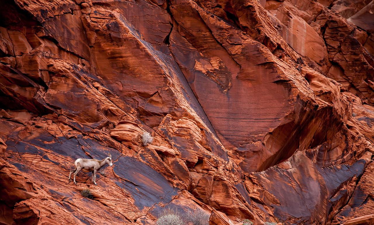 IMAGE: https://horshack.smugmug.com/Nature/Nevada/i-cFPWb9Q/0/X2/nevada_57-X2.jpg